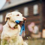 Megfelelő kutya szájkosár