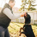 Kényelmes kutya nyakörv kedvencünknek