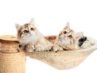 Megfelelő macskaalom kiválasztása