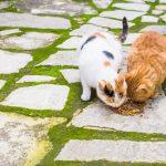 Egészséges macskakaja