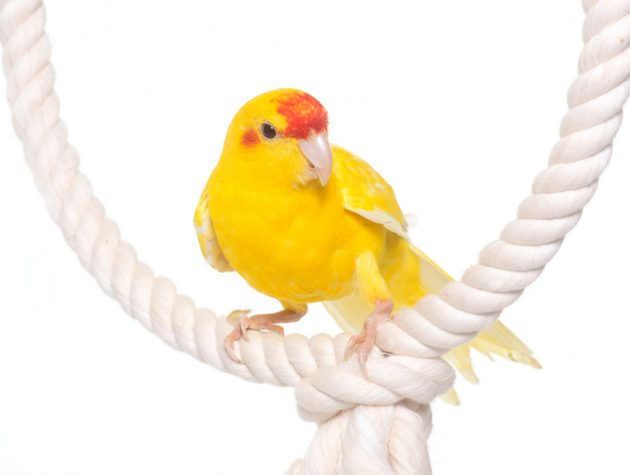 Izgalmas papagáj játékok