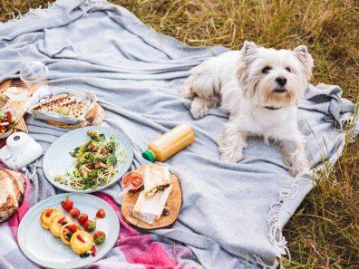 Finom és egészséges kutyakaja