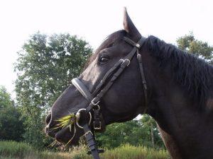 magyar lovak